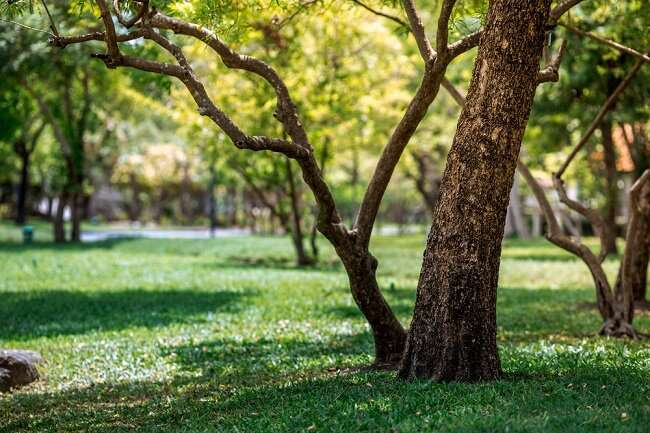Almost two thirds of people, 63%, reported a decrease in time spent visiting green spaces following movement restri