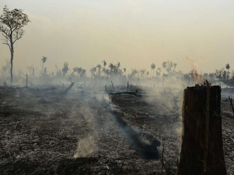 Amazon deforestation and fires are a hazard to public health