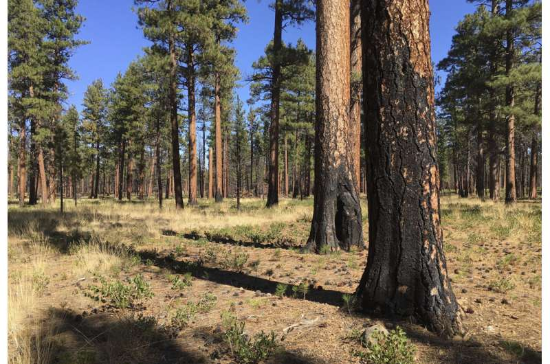 Amid clamor to increase prescribed burns, obstacles await