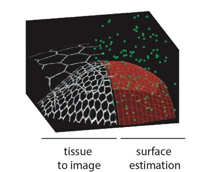 An adaptive microscope for the imaging of biological surfaces