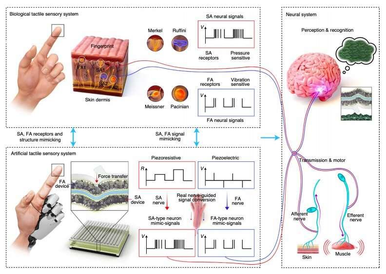 An artificial tactile skin that mimics human tactile recognition processes