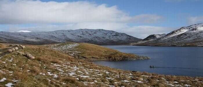 An at-risk species of fish has established itself in lochs across Scotland