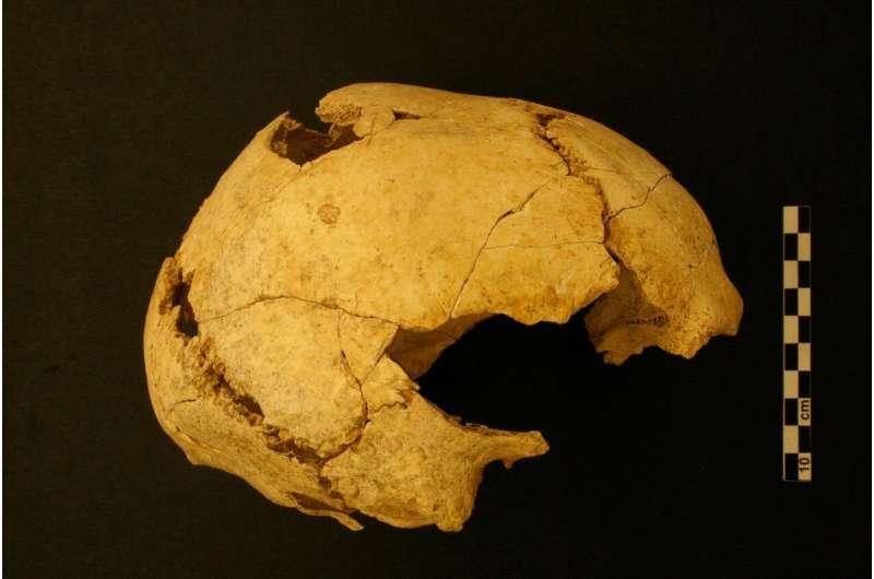 Analysis of ancient bones reveals Stone Age diet details