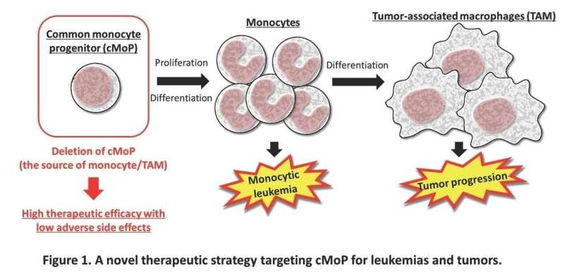 An antibody-drug combo to combat cancer