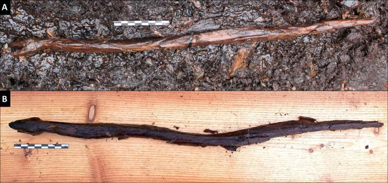Ancient carved snake found in Finland