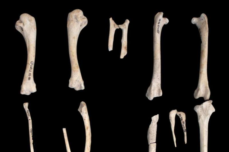 Las gallinas antiguas vivían significativamente más que las aves modernas porque se las consideraba sagradas, no comida