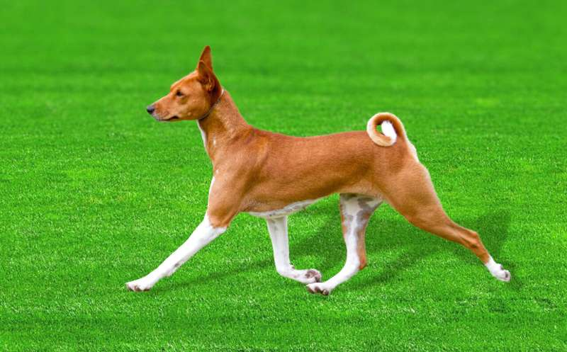 Ancient dog breed DNA helps unravel clues about evolution of man's best friend