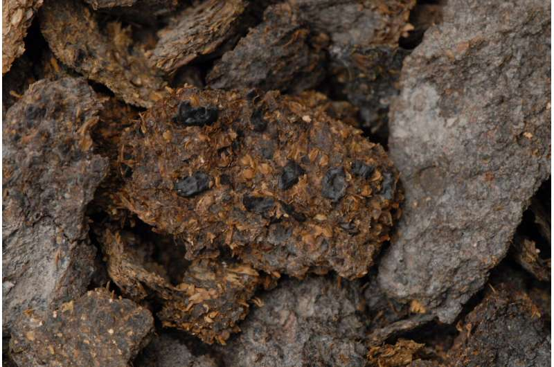 Ancient poop shows people in present-day Austria drank beer and ate blue cheese up to 2,700 years ago