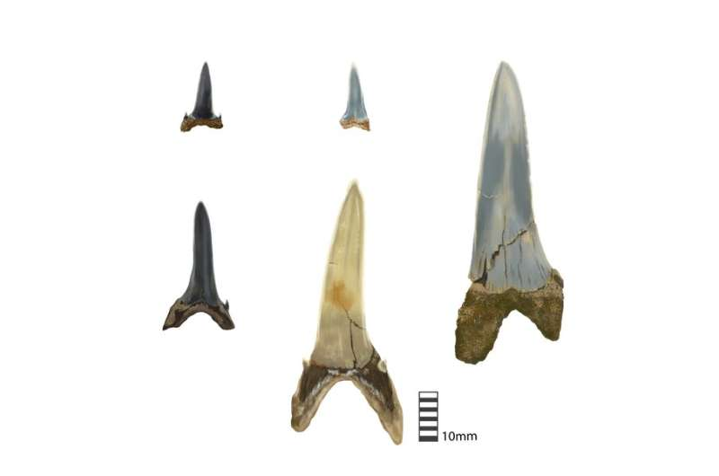 Ancient shark teeth lost in Antarctica millions of years ago recorded Earth's climate history