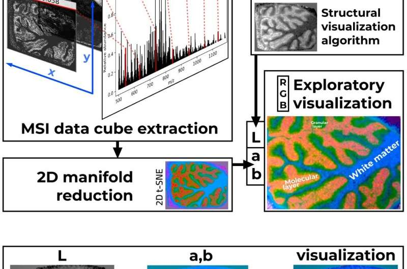 A new perceptually consistent method for MSI visualization
