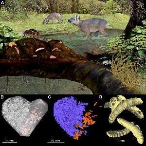 Animal evolution -- glimpses of ancient environments