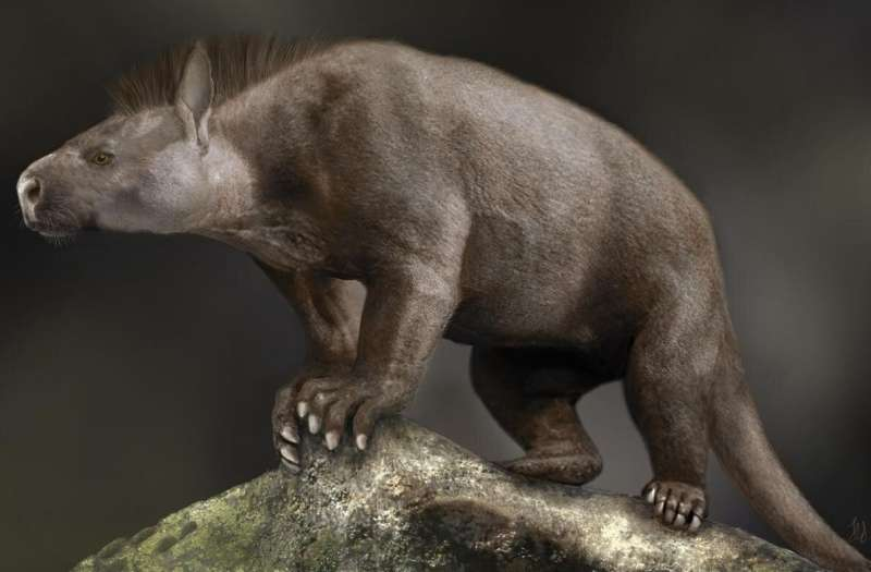 Ankle and foot evolution gave mammals a leg up