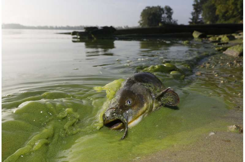 Another mild algae bloom forecast for Lake Erie this summer