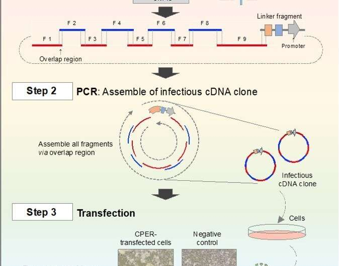A novel, quick, and easy system for genetic analysis of SARS-CoV-2