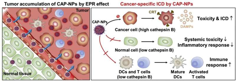 Anti-cancer immunotherapy drug with reduced side effects and increased therapeutic effects