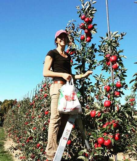 Antibiotics protect apples from fire blight, but do they destroy the native microbiome?