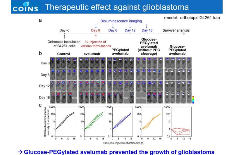 Antibody delivery technology empowers immunotherapy against glioblastoma and suppresses side effects