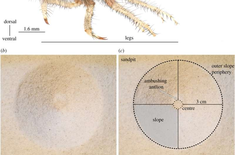 Antlions use sand-throwing to help capture prey