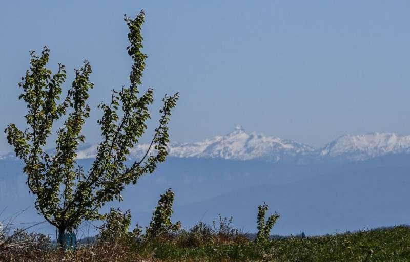 Los albaricoqueros cerca de Valence, sureste de Francia, también se han visto afectados por las heladas
