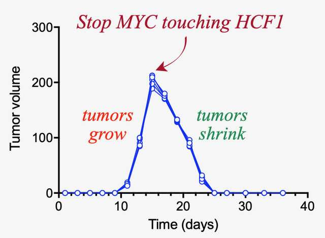 A protein that can melt tumors