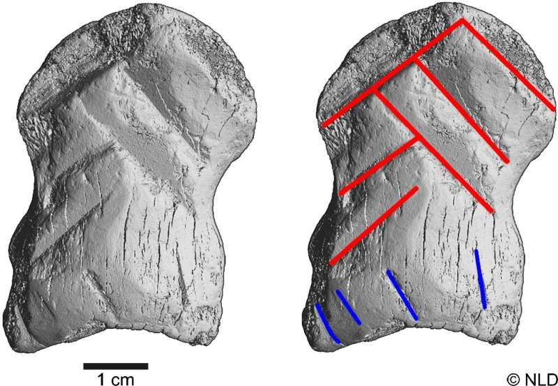 Archaeologists determined the artifact to be at least 51,000 years old—before the arrival of Homo Sapiens in central Europe