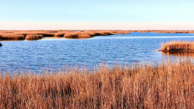 Are coastal marshes drowning faster than expected?