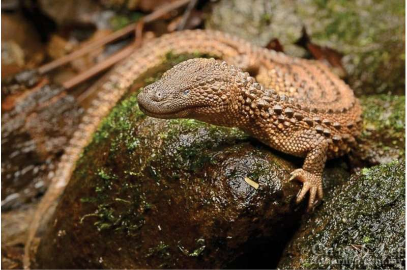 Are zoos inadvertently complicit in wildlife trade? The case of a rare Borneo lizard