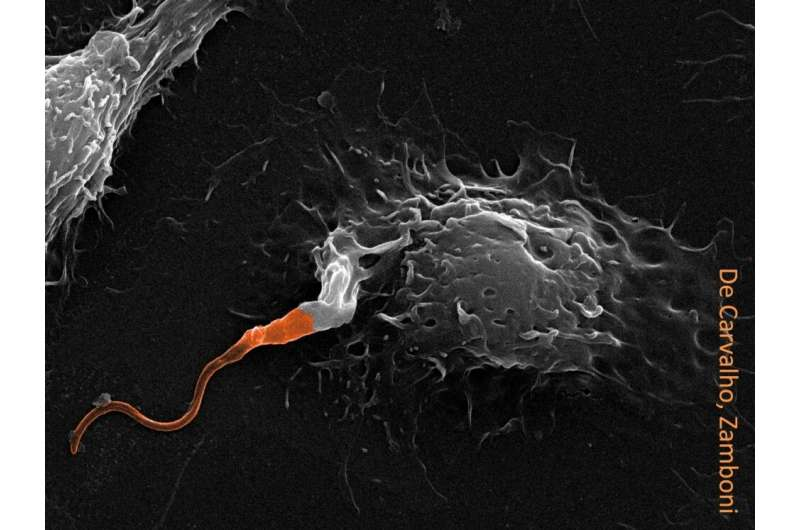 Arsenal used by parasite to affect cellular defense and enhance leishmaniasis is revealed
