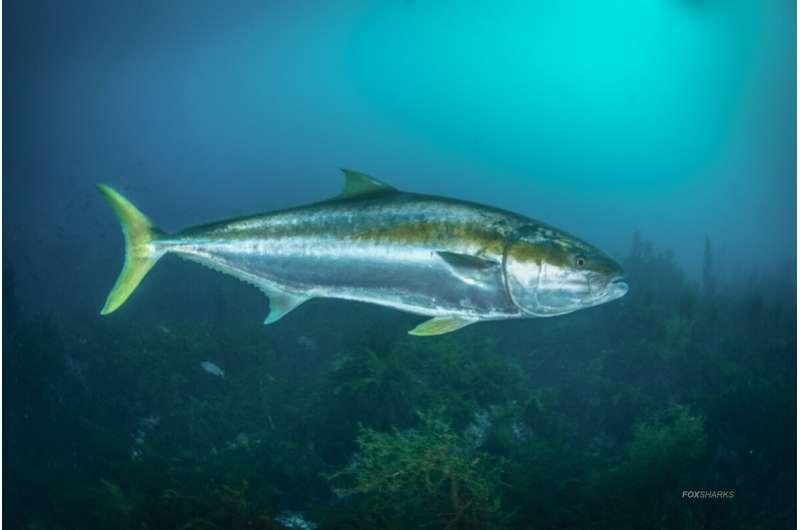 Artificial intelligence understanding fishy behavior