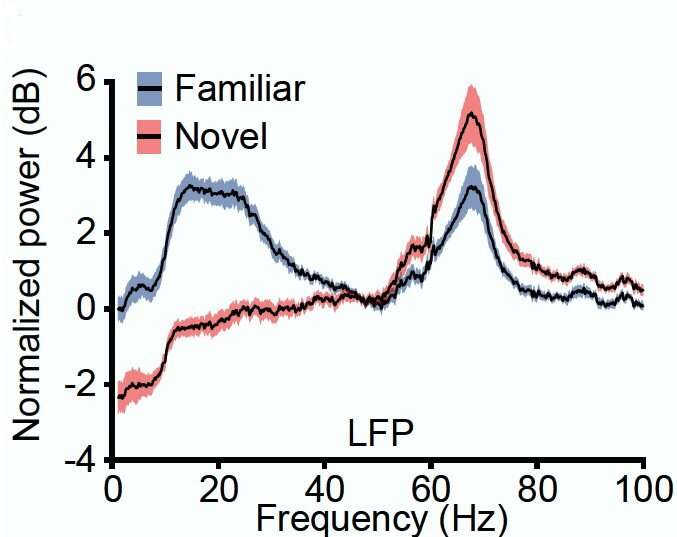 As novel sights become familiar, different brain rhythms, neurons take over
