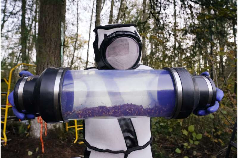 Asian giant hornet nest destroyed in Washington state