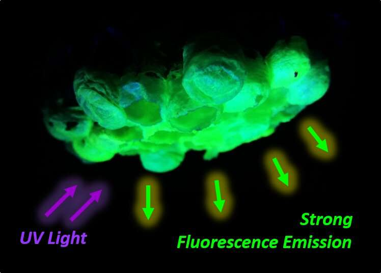 Asian paper wasp nests found to have bright green fluorescence