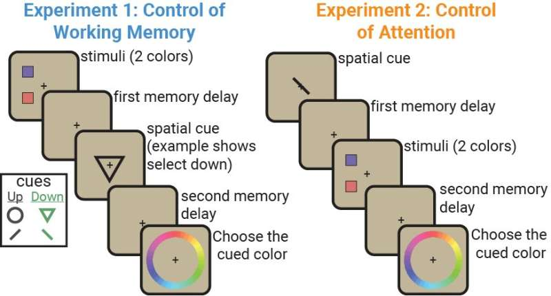 Attention and working memory: Two sides of the same neural coin?