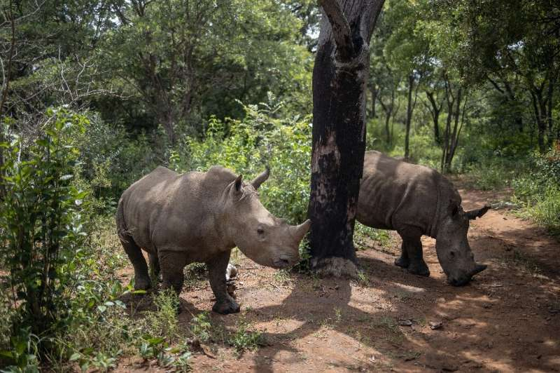 A unique centre hidden away in South Africa is dedicated to  rehabilitating rhino orphans