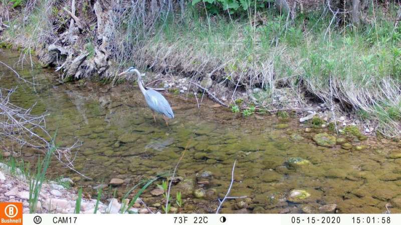 Automatic trail cameras keep wildlife research going during pandemic