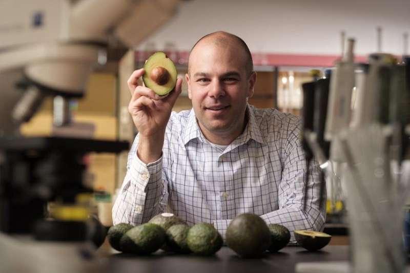 Avocado discovery may point to leukemia treatment