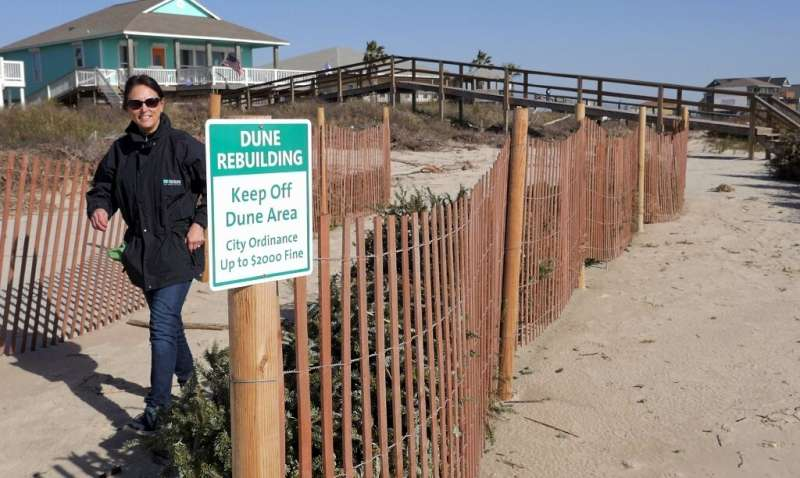 A volunteer walks by a sign about the dune rebuilding program—using recycled Christmas trees—in Surfside Beach, Texas