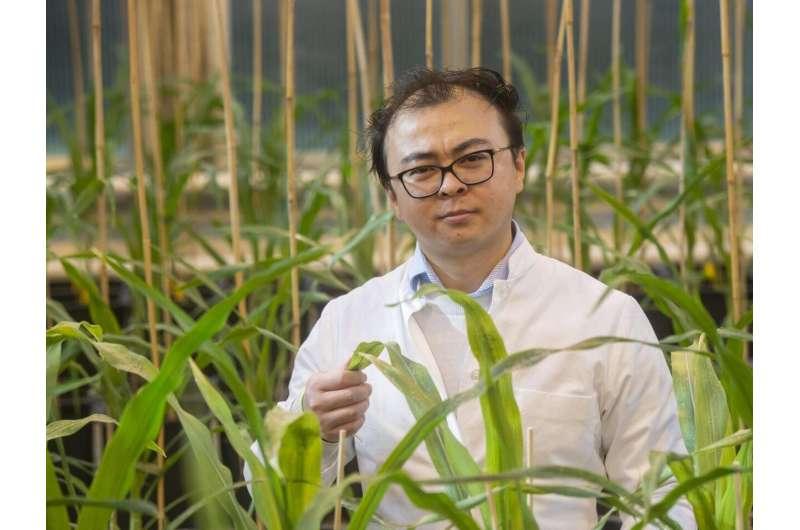 Las bacterias ayudan a que las plantas crezcan mejor