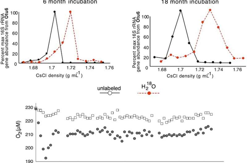 Bacterial evolution in ancient sub-seafloor sediments