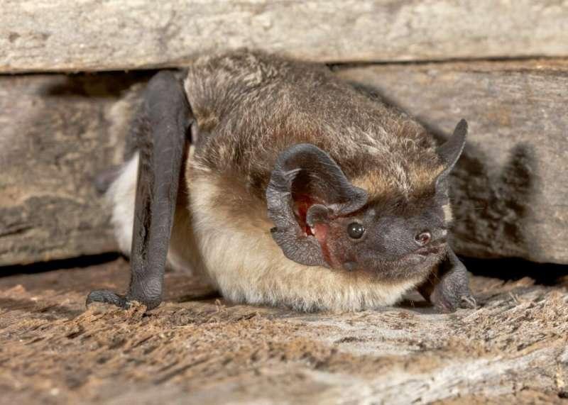 Bats in Switzerland harbor diverse viruses, some potentially zoonotic