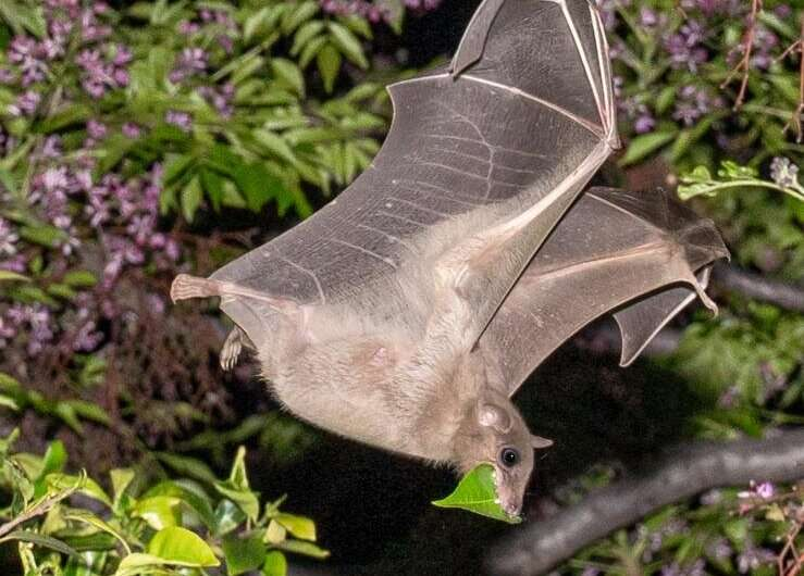 Bats in Tel Aviv enjoy the rich variety and abundance of food the city has to offer