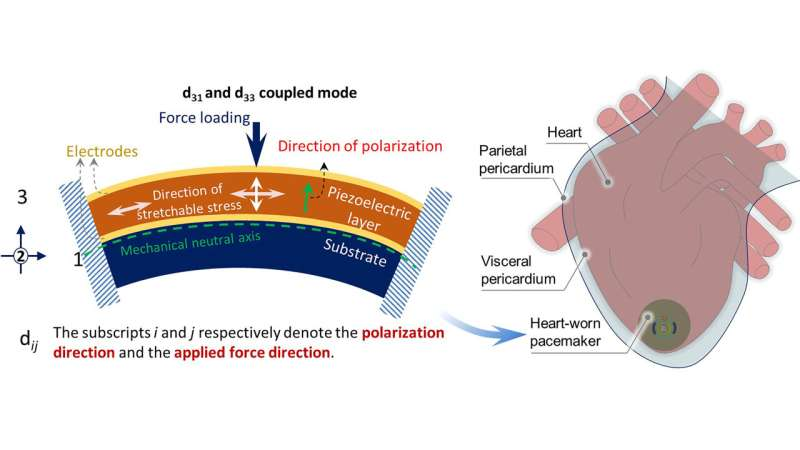 Batteryless pacemaker could use heart's energy for power