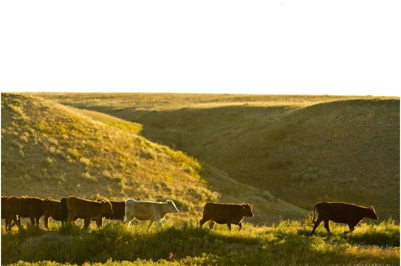 Beef industry can cut emissions with land management, production efficiency