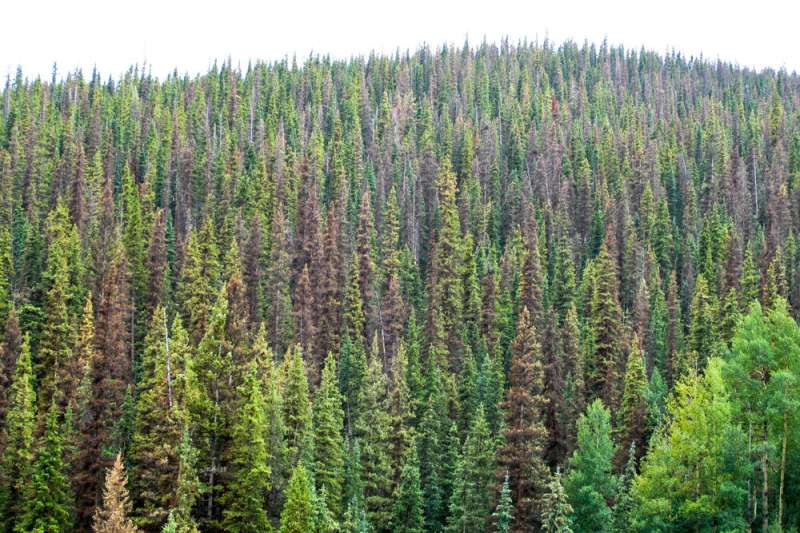 Beetle outbreak impacts vary across Colorado forests
