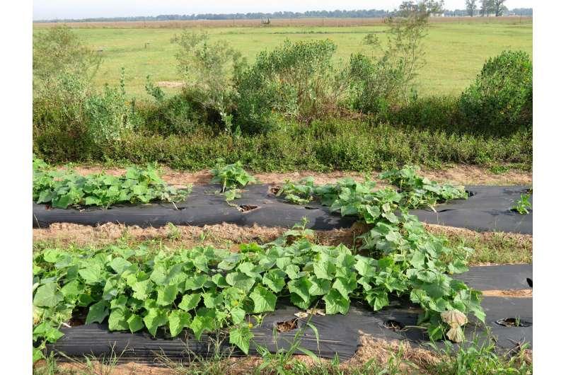Beneficios de las plantas compañeras que atraen polinizadores