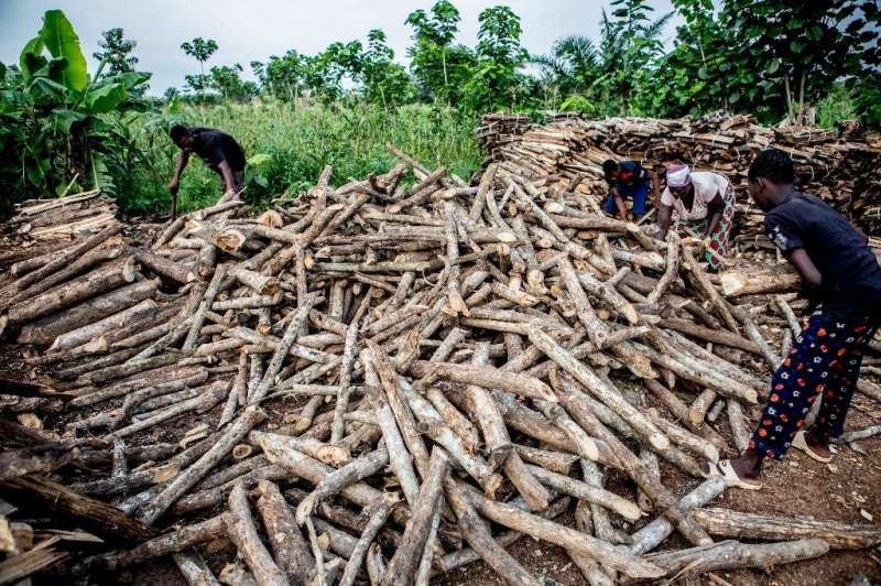 Between 2005 and 2015, Benin's forest cover was slashed by more than 20 percent, according to the World Bank