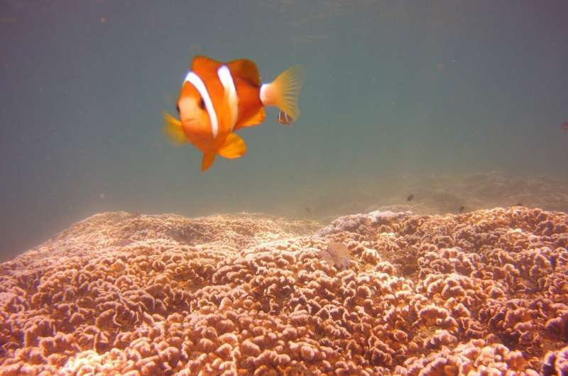 Big differences in how coral reef fish larvae are dispersed
