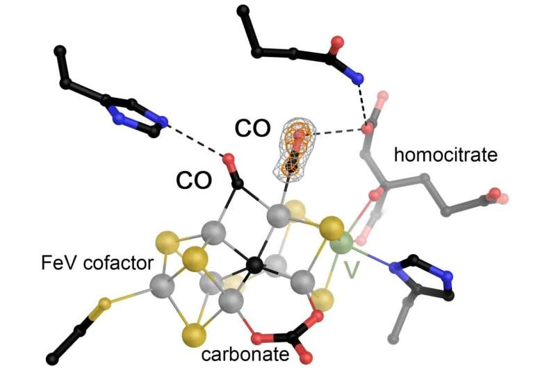 Binding of a second CO molecule observed