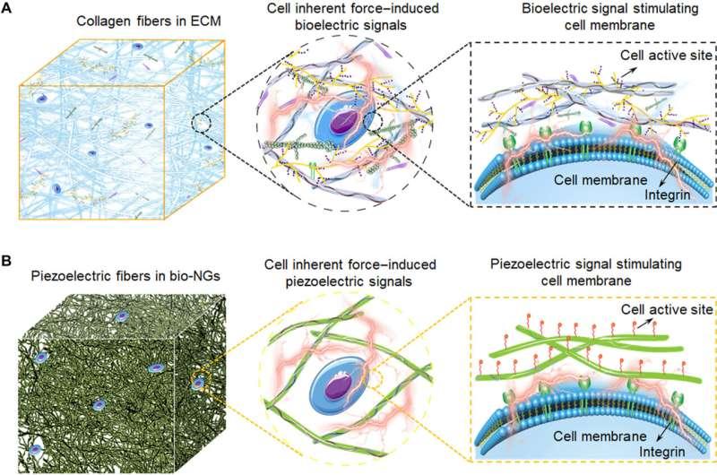 Bioinspired electromechanical nanogenerators to regulate cell activity