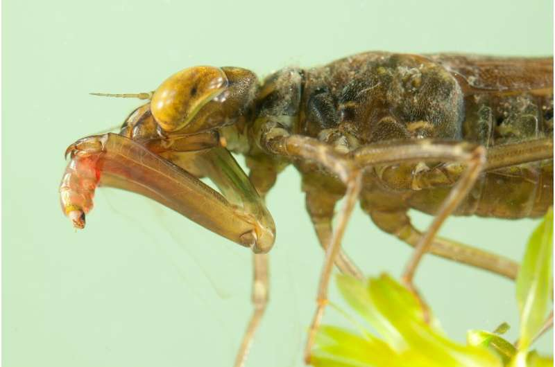 Bio-inspired robotics: learning from dragonflies